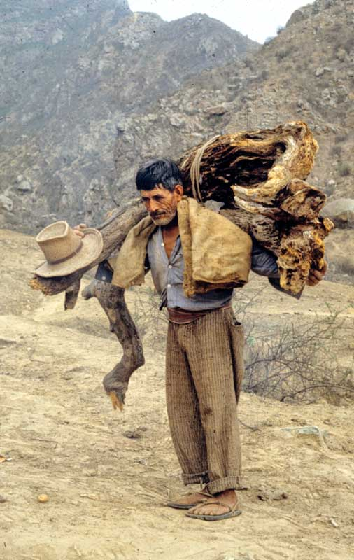 Wood gatherer in Peru
