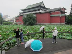 NHM_lotus garden-1